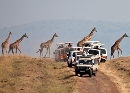 Safari holiday game drives