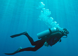 Snorkeling and Diving activities Kenya