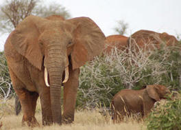 Where to Watch the big five animals