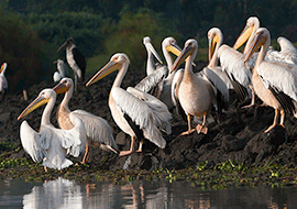 Uganda top birding places and tour packages