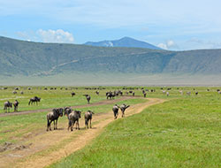 Attractions at Ngorongoro Crater