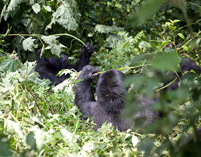 what to see on a gorilla trekking tour
