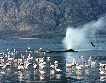 Lake Bogoria tour packages