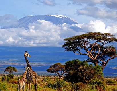 Wildlife safari and Mountain climbing in Tanzania