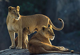 Safari Holidays in Tanzania