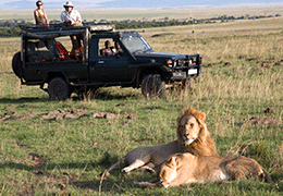Safari & Beach Honeymoon