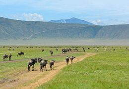 Ngorongoro Wildlife Safari