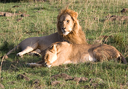 Serengeti Safari Holiday