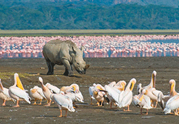 Lake Nakuru Safari Holiday