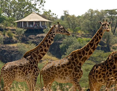Masai Mara luxury wildlife safari holiday