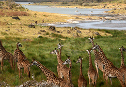 Arusha National Park Tour