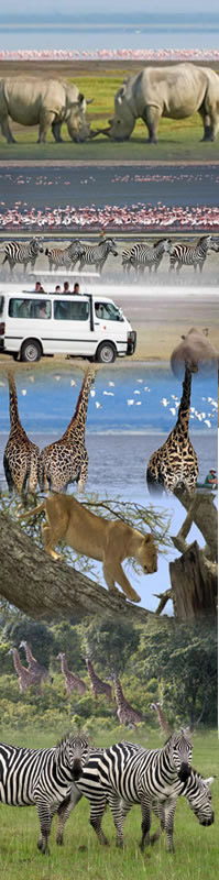 popular african holiday on safari and bird watching