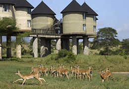 Tsavo Safari Holiday