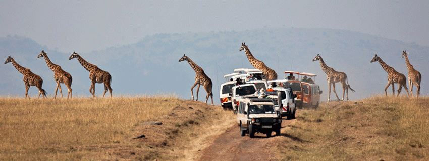 combined beach and safari honeymoon