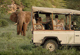 Special Holiday on Safari