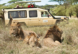 11 Days Family Safari Holiday