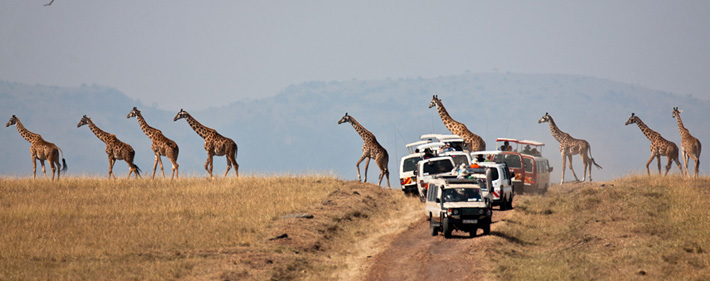 Safari photography workshops and trips in Africa