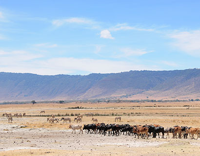 safari and cultural tour at Ngorongoro