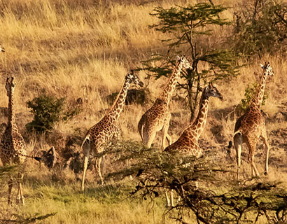 Family holiday destinations in Tanzania