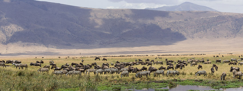 wildlife watching holidays in Ngorongoro