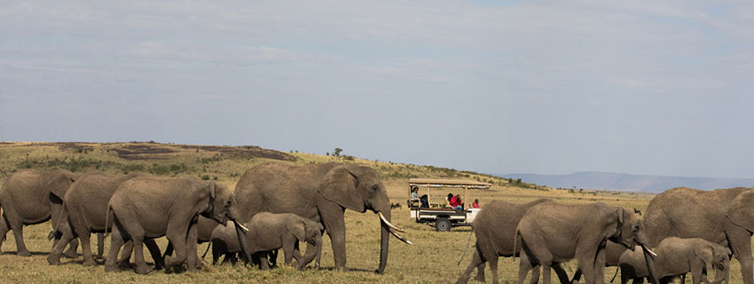 wildlife watching holidays in serengeti