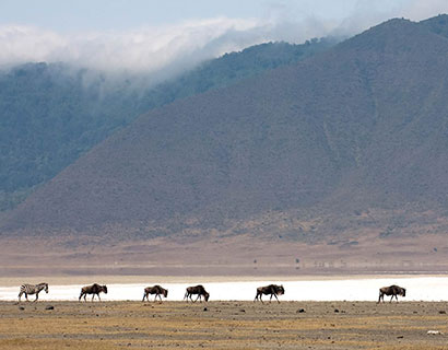 nature walks in Tanzania Ngorongoro crater