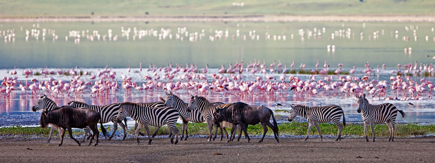 safari holiday in Ngorongoro