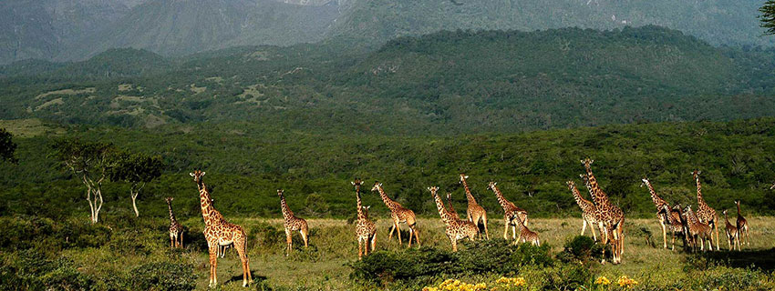 Holiday and safari adventures in Africa