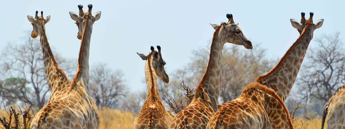Photography tour in Africa