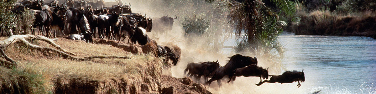 wildebeest migration tour
