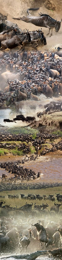 Masai Mara wildlife migration tour in Kenya