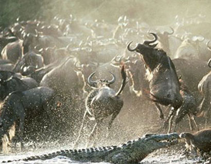 Images of the great Migration