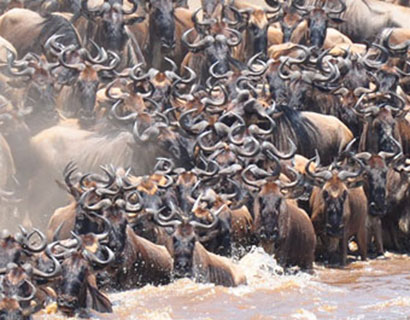 What to see on The Great Migration