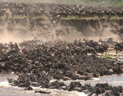 The great migration holiday packages
