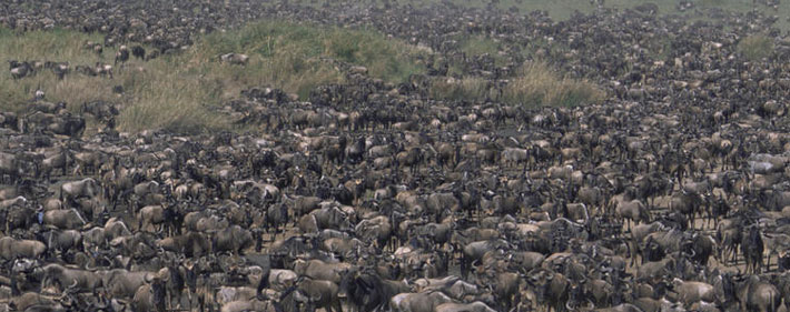 When to see the great migration